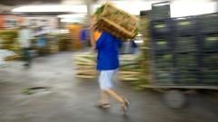 Homem leva caixa com verduras no Mercado Livre do Produtor (MLP) do CEAGESP. Foto: Marcos Santos / USP Imagens
