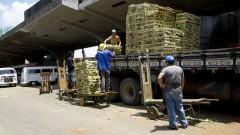 Trabalhadores do CEAGESP descarregam mercadorias de caminhão no Mercado Livre do Produtor (MLP). Foto: Marcos Santos / USP Imagens