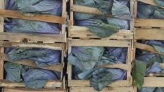 Verduras estocadas em caixas no Pavilhão MLP. Foto: Marcos Santos/USP Imagens