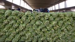 Milhos para comercialização no Mercado Livre do Produtor no Ceagesp. Foto: Marcos Santos/USP Imagens