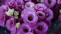Detalhe de arranjo de flores comercializado no Mercado Livre do Produtor (MLP) do Ceagesp. Foto: Marcos Santos / USP Imagens