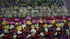 Grande variedade de cores. Flores a venda no Ceagesp. O Entreposto da capital também abriga a maior Feira de Flores e Plantas do País. Foto: Marcos Santos / USP Imagens
