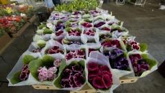 Flores comercializadas em caixas de papelão no Ceagesp. O Entreposto da capital também abriga a maior variedade de plantas na Feira de Flores e Plantas do País. Foto: Marcos Santos / USP Imagens