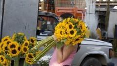 Compradora com maços de girassol na Feira de Flores no Mercado Livre do Produtor (MLP) do Ceagesp. Foto: Marcos Santos / USP Imagens