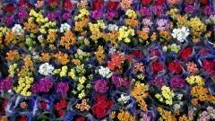 Flores comercializadas no Ceagesp. O Entreposto da capital também abriga a maior variedade de plantas na Feira de Flores e Plantas do País. Foto: Marcos Santos / USP Imagens