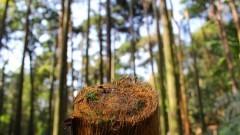 Detalhe de uma árvore cortada no Viveiro da COCESP Foto: Marcos Santos/USP Imagens