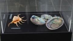 Exposição Moluscos Jóias da Natureza – Engenho São Jorge dos Erasmos