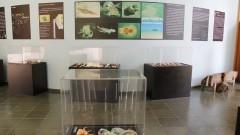 Exposição Moluscos Jóias da Natureza. Foto: Marcos Santos/USP Imagens