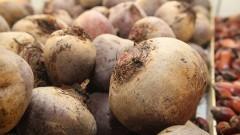 Beterrabas e Cenouras – Tubérculos