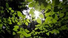 Luz solar passa entre as folhas no Parque Esporte Para Todos do CEPEUSP. Foto: Marcos Santos/USP Imagens
