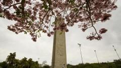 Árvore florida na Praça do Relógio. Foto: Marcos Santos/USP Imagens