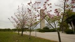 Árvores floridas na Praça do Relógio. Foto: Marcos Santos/USP Imagens