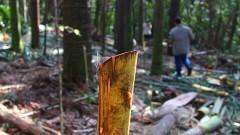 Replantio de árvores no Viveiro da COCESP. Foto: Marcos Santos/USP Imagens