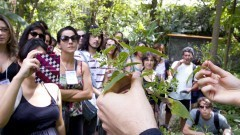 Público presente recebe orientações de Gui Reis (EACH/USP) sobre como identificar plantas alimentícias não convencionais. Foto: Marcos Santos/USP Imagens