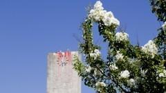 Flores e ao fundo relógio da Cidade Universitária. Foto: Marcos Santos/USP Imagens