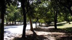 Árvores na avenida Professor Luciano Gualberto. Foto: Marcos Santos/USP Imagens
