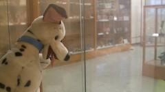 """Boneco de cachorro de pelúcia na exposição """"Cenas Infantis e Brinquedos da Infância"""" no Museu da Educação e do Brinquedo (MEB) da Faculdade de Educação (FEUSP). Foto: Marcos Santos / USP Imagens"""