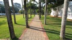 Detalhe de palmeiras alinhadas próximas ao prédio da Edusp, na Rua da Praça do Relógio Solar. Foto: Marcos Santos / USP Imagens