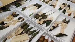Museu de Zoologia – Taxidermia II