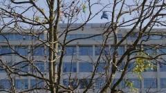 Detalhe de árvore em primeiro plano com o prédio da Reitoria ao fundo. Foto: Marcos Santos / USP Imagens