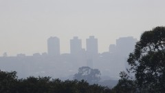Detalhe de árvores em primeiro plano e ao fundo vista de névoa de poluição em meio a prédios na cidade de São Paulo. Foto: Marcos Santos/USP Imagens