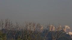 Detalhe de árvores em primeiro plano e ao fundo vista da poluição na cidade de São Paulo. Foto: Marcos Santos/USP Imagens