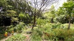 Vista geral da horta das corujas. Ela é uma horta comunitária experimental, e uma de suas características únicas é estar numa praça pública no meio da cidade de São Paulo. Foto: Marcos Santos/USP Imagens