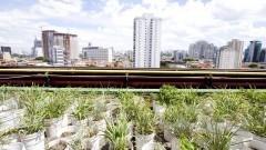 Telhado Verde. Foto: Marcos Santos/USP Imagens