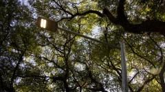 Nova iluminação da Cidade Universitária. Foto: Marcos Santos/USP Imagens