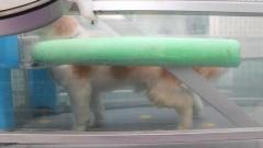 Cachorro com lesão na coluna