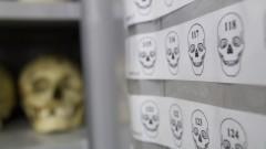 Crânio. Museu de Anatomia Humana - MAH. Foto: Marcos Santos/USP Imagens