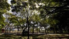 Árvores na Avenida Professor Mello Moraes. Foto: Marcos Santos / USP Imagens