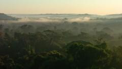 Floresta  Amazônica. Foto: Cecilia Bastos/Jornal da USP