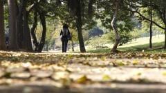 Estudante caminha em calçada cheia e folhas da Avenida Professor Luciano Gualberto. Foto: Marcos Santos / USP Imagens