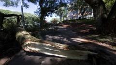 Queda de árvore na Avenida Professor Lineu Preste próximo a Faculdade de Farmácia. Foto: Marcos Santos/USP Imagens