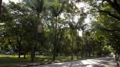 Vista da Avenida da Universidade próximo a portaria 1. Foto: Marcos Santos/USP Imagens