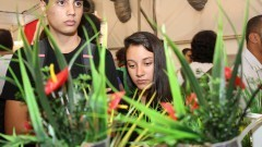 Jovens acompanham a explicação de uma aluna na 12ª edição da Feira Brasileira de Ciências e Engenharia (Febrace). Foto: Marcos Santos / USP Imagens
