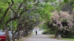Vista do Campus no Butantã. Marcos Santos/USP Imagens