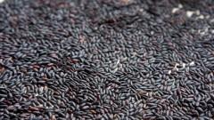 Grãos de arroz integral preto
