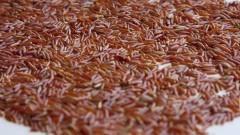 Grãos de arroz integral vermelho