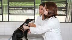 lunas da Faculdade de Medicina Veterinária e Zootecnia (FMVZ) acalmam e brincam com um cachorro, na Cidade Universitária, São Paulo. Foto: Marcos Santos.