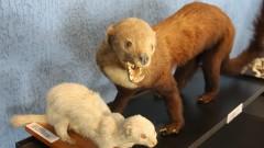 Exemplares de diversos animais empalhados estão em exibição no Museu de Anatomia Veterinária da Faculdade de Medicina Veterinária e Zootecnia da Universidade de São Paulo (FMVZ - USP). Foto: Marcos Santos.