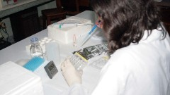 Trabalho no laboratório dos cursos de Entomologia e Biologia Comparada da Faculdade de Filosofia, Ciências e Letras de Ribeirão Preto. (Foto: Creusa Maria Martins/Audiovisual FFCLRP).