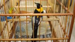 Pássaro na gaiola no Ambulatório de Aves do Hospital Veterinário. Foto:Marcos Santos/USP imagens