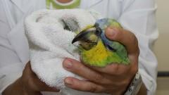 Professora cuida de pássaro no Ambulatório de Aves do Hospital Veterinário. Foto:Marcos Santos/USP imagens