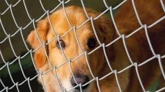 Cachorro em tratamento no canil da FMVZ. Foto: Marcos Santos/USP Imagens