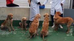 Cachorros em tratamento no canil da FMVZ. Foto: Marcos Santos/USP Imagens