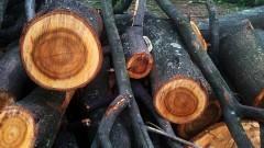 Queda de árvore. Foto: George Campos / USP Imagens