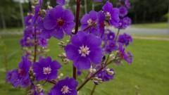 Flores na Praça Prof. Rubião Meira. Foto: Marcos Santos/USP Imagens