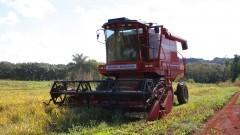 Colheitadeira colhendo arroz. Foto: Marcos Santos/USP Imagens